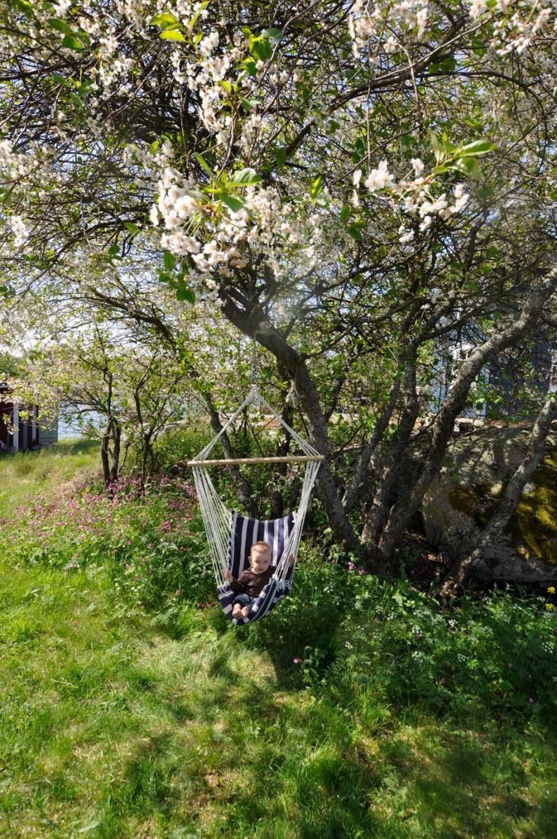 Wilde Kirschen blühen