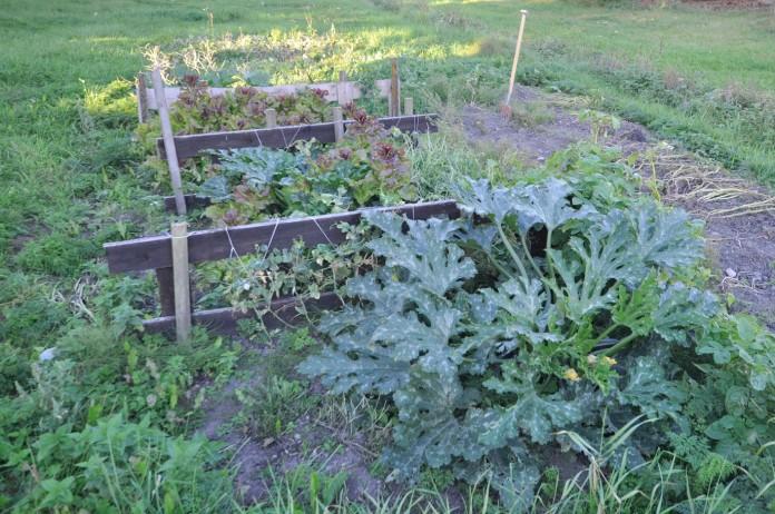 gemuesegarten-anfang-september