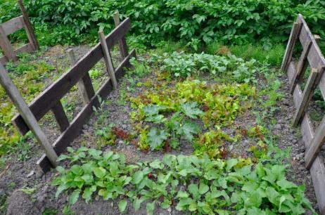 gemuesegarten-mitte-juli-3