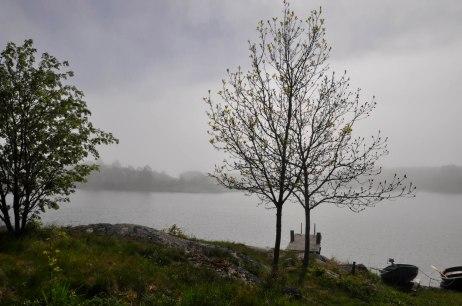 17-06-09 _ Sonne und Nebel 2
