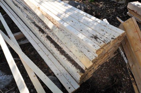 Ameisenhaufen in Bretterstapel 2